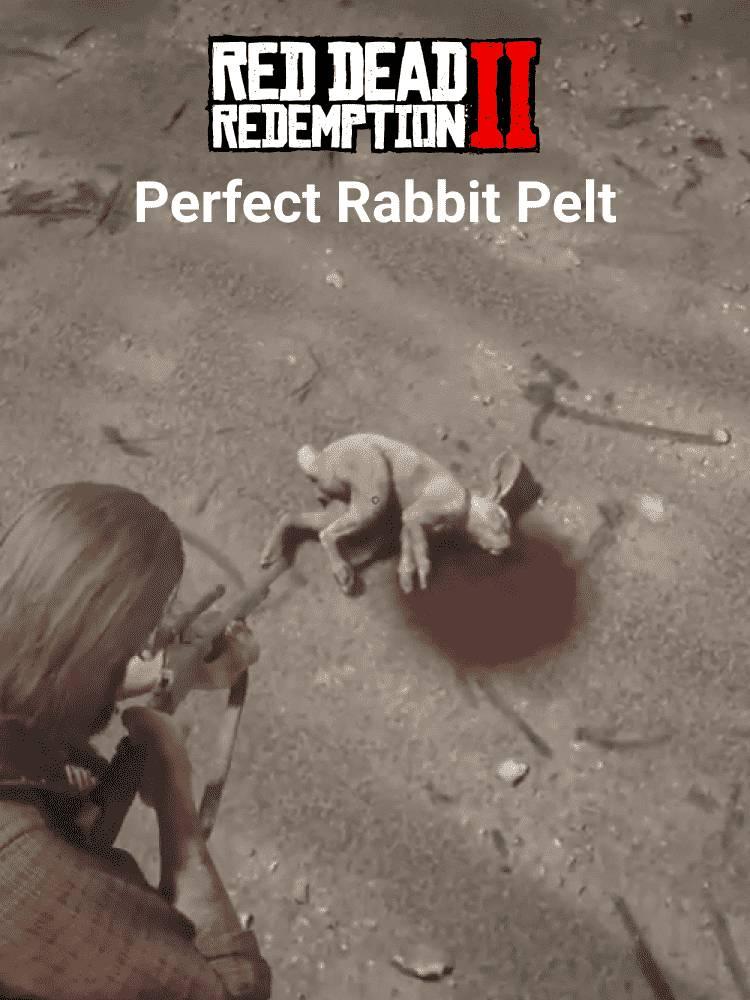 Hunt Perfect Rabbit Pelts in RDR2